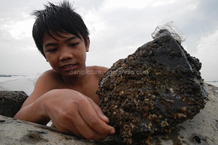 Mengambil kerang hijau yang menempel di bongkahan batu