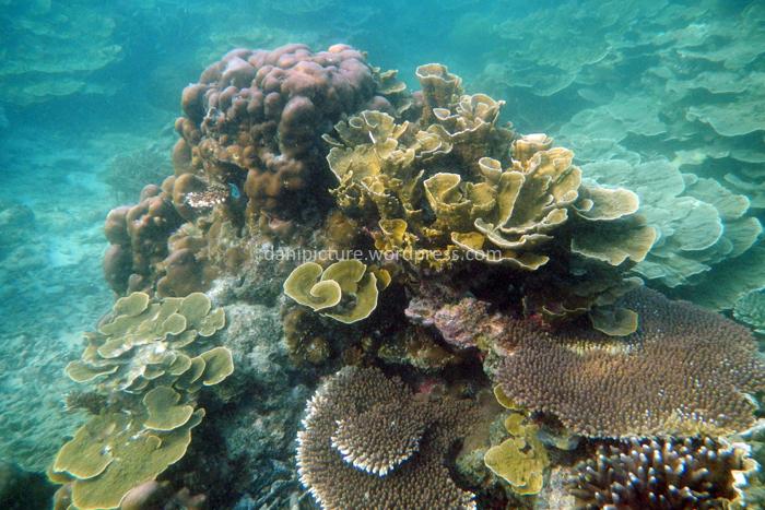 Terumbu Karang di Pulau Pari masih terjaga dengan baik, ikannya juga cukup besar-besar.