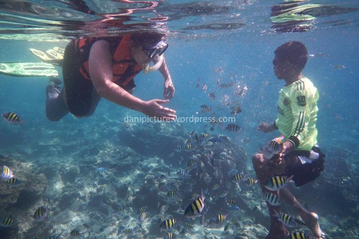 Berenang bersama ikan laut yang warna warni