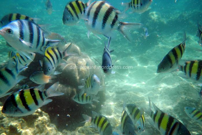 Karena sudah terbiasa dikasih makan sama pengunjung, ikan-ikan di sini pada jinak.