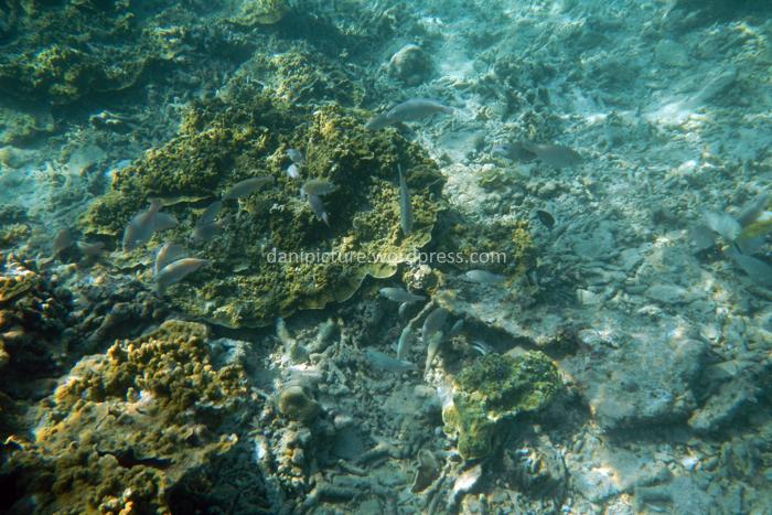 Ikan diantara terumbu karang yang sudah hancur.