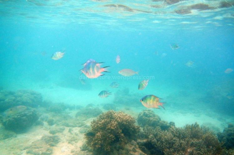 Salah satu tempat snorkling favorit adalah depan penginapan, ikan dan terumbu karangnya bervariasi, sayangnya waktu itu pas snorklig ke 2 abis  turun hujan dan arus laut agak kenceng...jadi butek airnya.