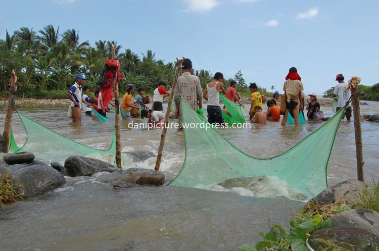 Impun yang ikut arus aliran sungai akan terperangkap dalam jaring.