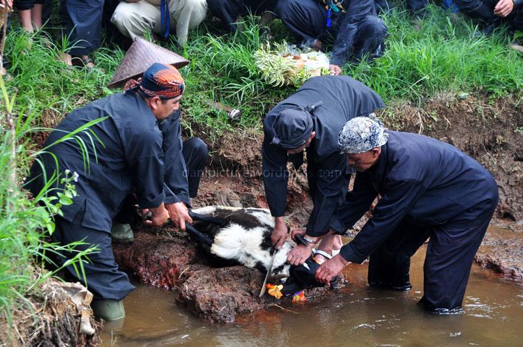 Penyembelihan Domba, simbol bahwa warga harus rela berkorban apapun untuk merawat sumber air.